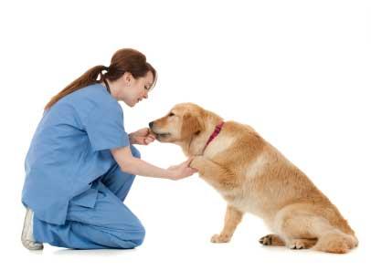 Ветеринарная помощь на дому саоанализ крови орехово-зуево психиатр нарколог медицинская водительская справка
