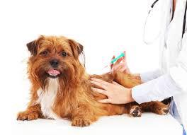 вакцинация собак( прививки собакам)