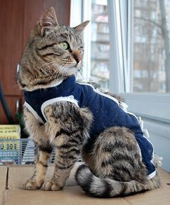 кошка в попоне после кастрации