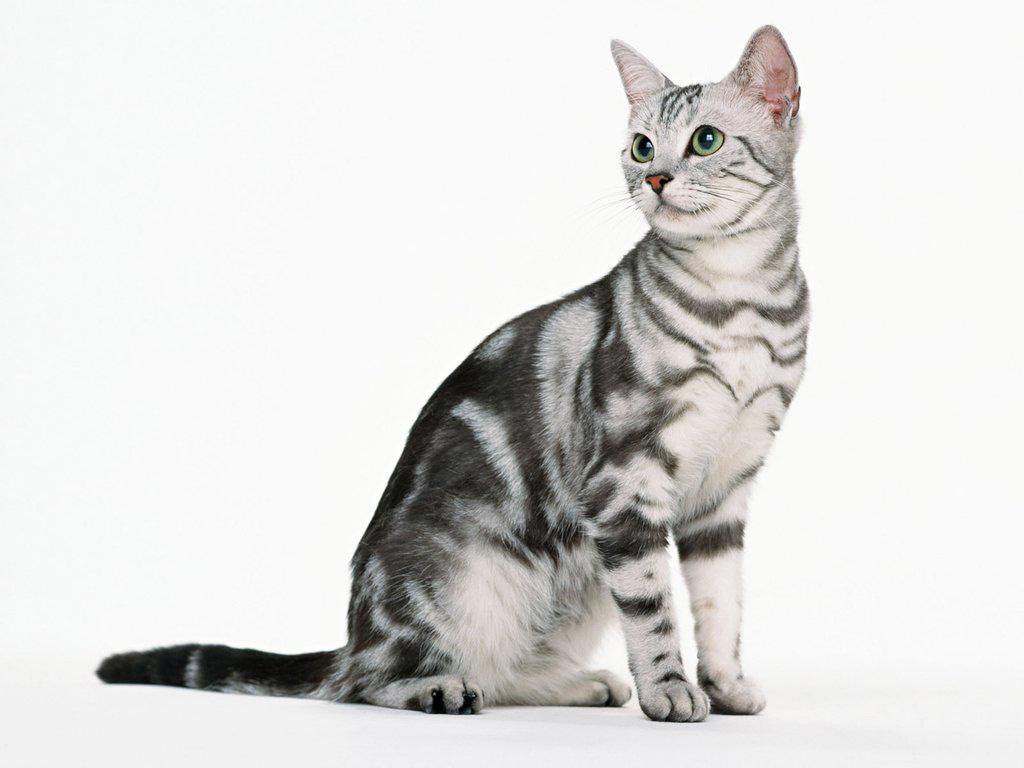 Почему кот много пьет воды и часто ходит в туалет